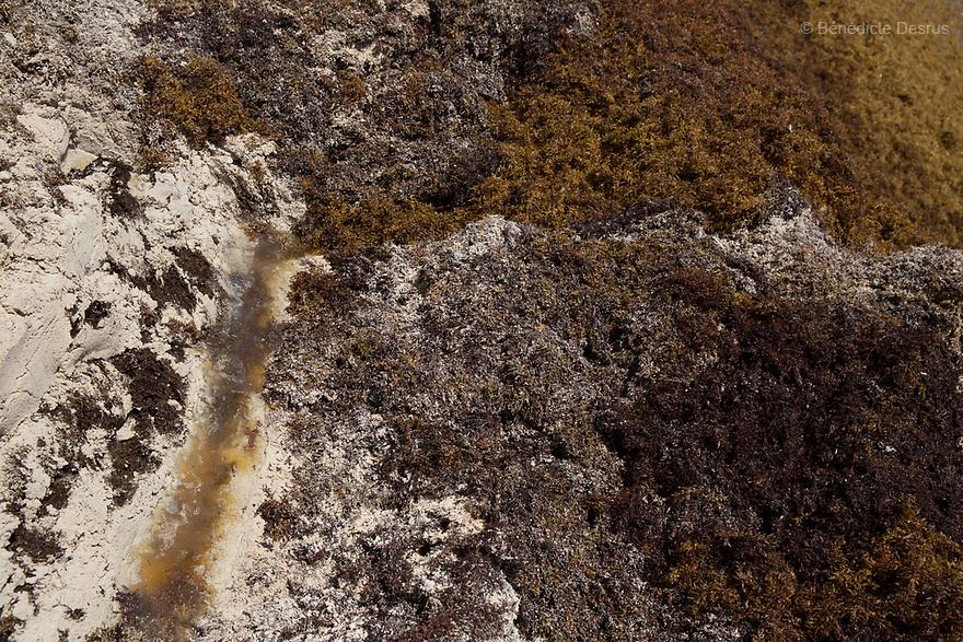 Mexico: Masses of Sargassum seaweed washing up on Caribbean