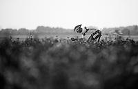 Guillaume Van Keirsbulck (BEL)<br /> <br /> Eneco Tour 2013<br /> stage 5: ITT<br /> Sittard-Geleen 13,2km