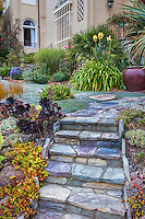 Stone steps entry steps into California urban front yard garden with succulents on slope; Schneck Garden
