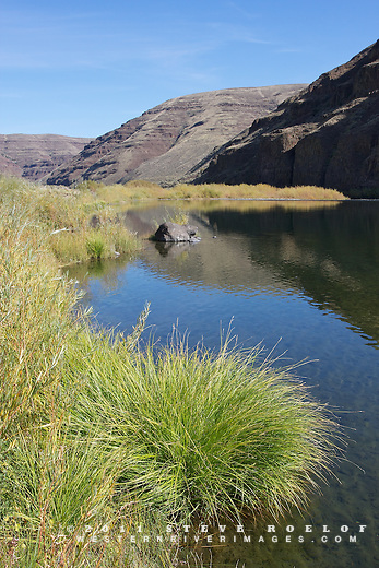 Willow and sedge on the banks of the John Day River, Oregon.
