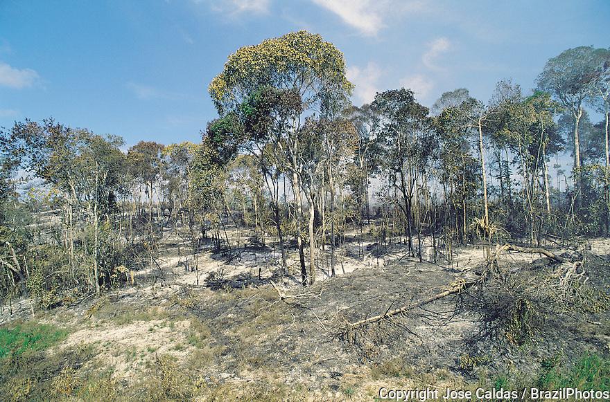 Deforestation in the Atlantic rainforest, environmental degradation, rainforest clearance, Brazil.
