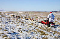 Paul Gebhardt on snowless tundra just up from the Unalakleet river nearing Unalakleet