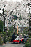 April 10, 2012, Kyoto, Japan - Kyoto residents eat and drink under the cherry trees near the Chion-in temple. Hanami is one of the oldest traditions in Japan, which is to admire the cherry blossoms. Last year this tradition was interrupted in the northeast of Japan, because of the big earthquake and tsunami of March 11, 2011.