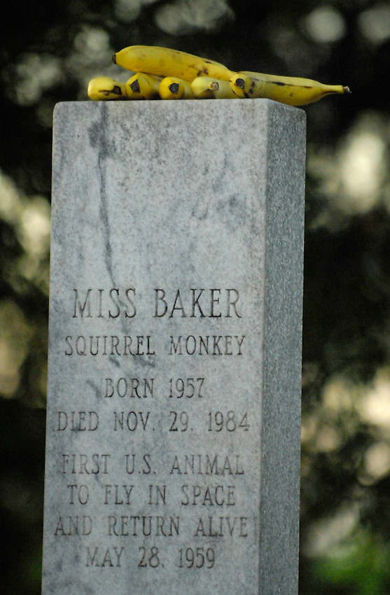 May 28th is the 48th anniversary of Miss Baker's historic flight into space.  Miss Baker, a squirrel monkey,  was the first u.s. animal to fly in space and return alive.  Visitors to her memorial at the U.S. Space & Rocket Center often leave banannas atop her monument.  Bob Gathany photo.,