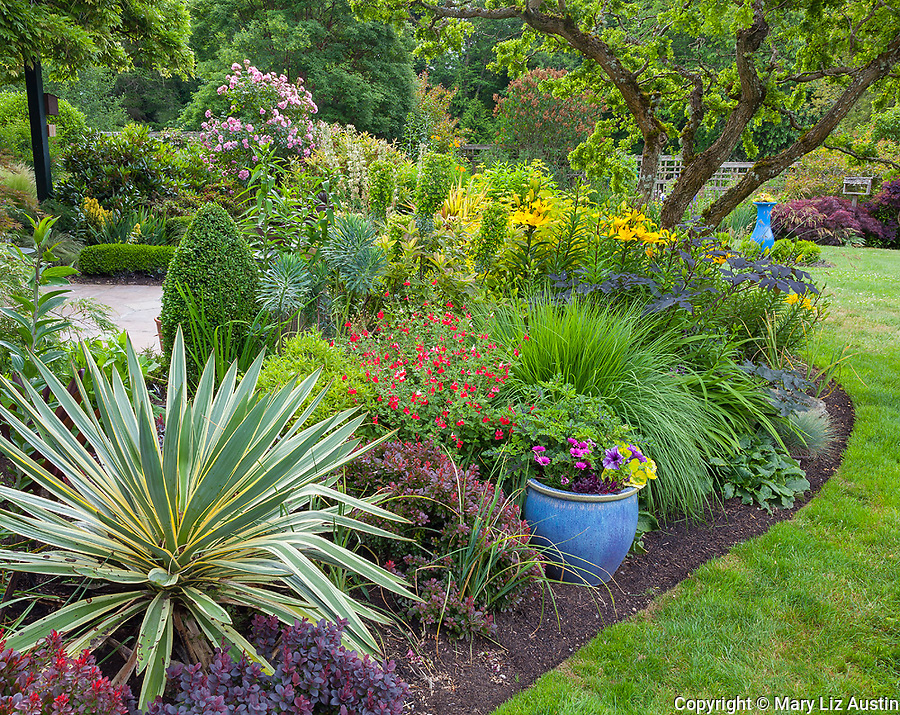 Vashon Island, WA: Perennial garden bed featuring varigated yucca, salvia 'hot lips', asiatic lilies, and barberry in Froggsong garden in summer