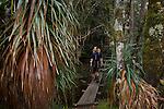 The prominent spiky pandani is one of the world's tallest heath plants....Pandani (richea pandanifolia) cette variété de bruyère est la plus haute au monde.Comme beaucoup de plantes de Tasmanie, elle partage un ancètre commun avec des espèces de Nouvelle Zélande et d'Amérique du Sud, terres qui étaient autrefois réunies en un même continent, le Gondwana
