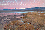 Cottonball Marsh area along Salt Creek in Death Valley National Park, California, USA