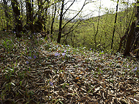 FOREST_LOCATION_90186