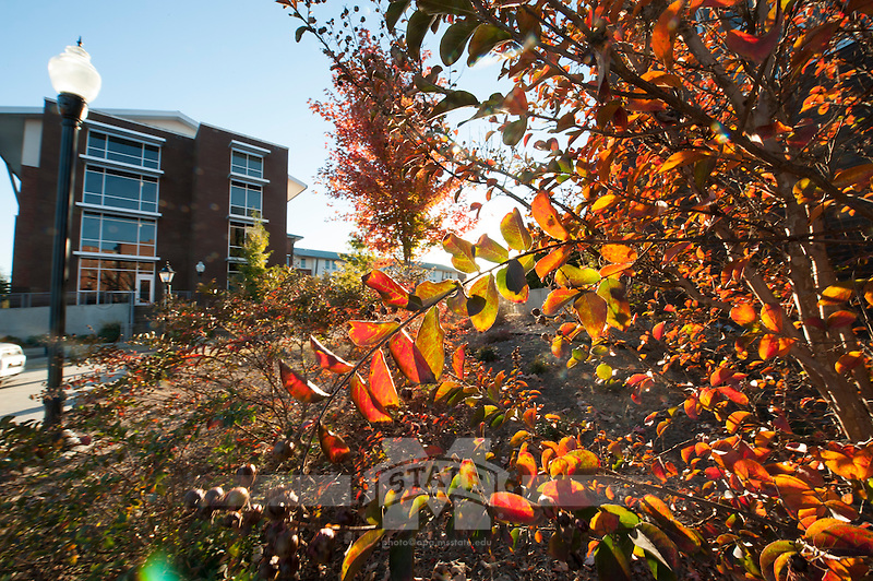 Fall Leaves at courtyard between Magnolia and Oak Halls.<br />  (photo by Megan Bean / &copy; Mississippi State University)