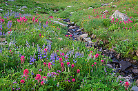 Wildflowers--lupine, arnica, paintbrush, cinquefoil and heather--in subalpine meadow along small stream, Mount Rainier National Park, WA.  Summer.
