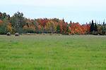 Hay harvest in autumn.    Images of The Canadian Maritime Provinces of Nova Scotia and Prince Edward Island.