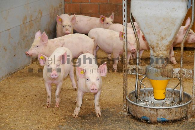Pigs, Schweine, Hausschweine, Landwirtschaft, agriculture,  Liechtenstein