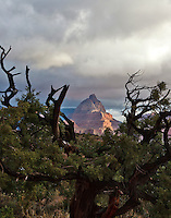 Vishnu Temple framed by a juniper on Horseshoe Mesa in the Grand Canyon.