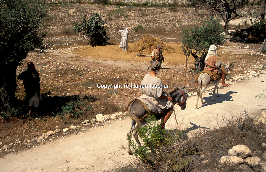 Israel, Galilee, Nazareth Village, recreating Nazareth in the time of Jesus