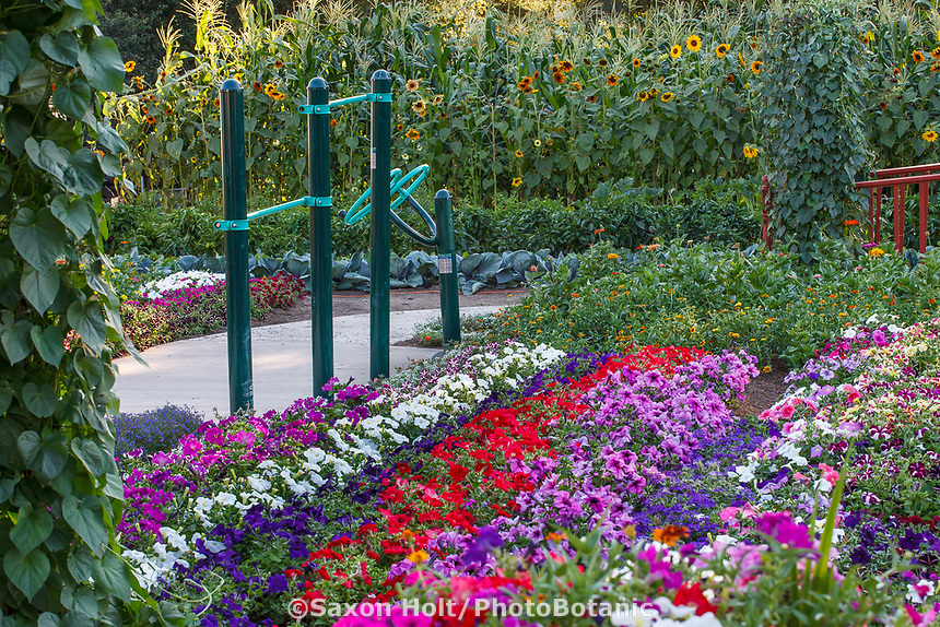 Physical therapy exercise equipment by colorful annual flower garden with petunias in Community Garden of Healdsburg Senior Living Center, California