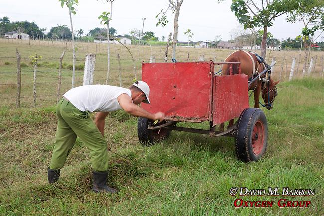 Man Cutting Grass With Machete