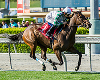 ARCADIA, CA APRIL 8:  #1 Sircat Sally ridden by Mike Smith wins the Providencia Stakes (Grade lll) on April 8, 2017 at Santa Anita Park in Arcadia, CA. (Photo by Casey Phillips/Eclipse Sportswire/Getty Images)