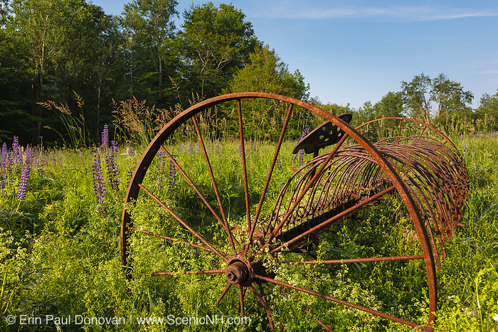 Rusted farm equipment in field during the Lupine Festival  in Sugar Hill, New Hampshire USA