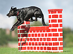 Dog jumping Wall for Agility - Lurcher Cross