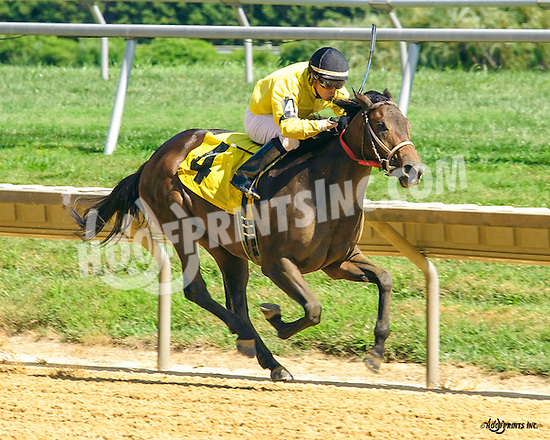 Bustin Gold winning before being disqualified at Delaware Park on 8/15/16