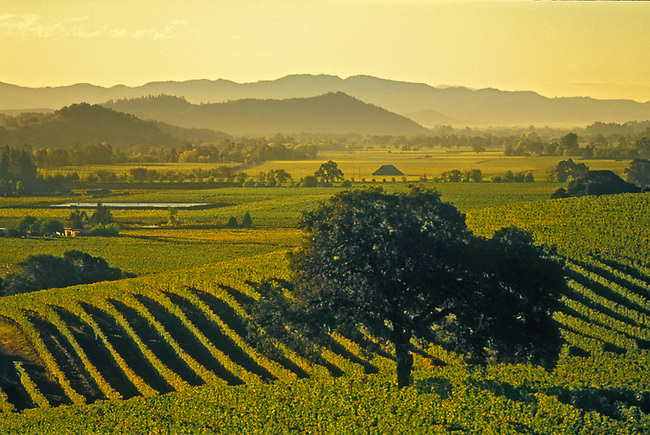 Napa Valley vineyard along Silverado Trail