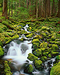 Olympic National Park, WA<br /> A small stream flows over moss covered rocks through an old growth hemlock forest in Upper Soleduck Valley