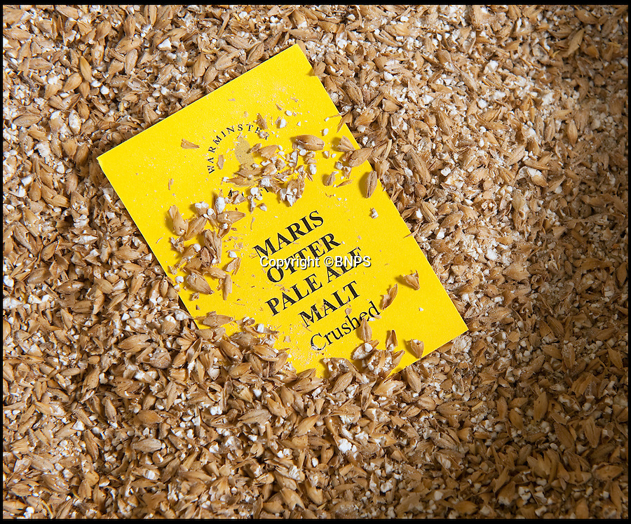 BNPS.co.uk (01202 558833)<br /> Pic: Phil Yeomans/BNPS<br /> <br /> Maris Otter can only be grown in the UK.<br /> <br /> The first of this years crop of top quality brewing barley is being malted at Britains oldest maltings in Warminster in Wiltshire.<br /> <br /> In continuous use since 1855, the purpose built malthouse produces 10 tons of the precious Maris otter malt every 3-5 days at this time of year as the fresh harvest is finally ready for the ancient process.