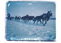 Musher on Knik 1987 Iditarod Sled Dog Race Polaroid Trans