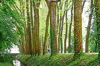 France, Indre-et-Loire (37), Chenonceaux, château et jardins de Chenonceau, allée d'honneur vers le château et platanes