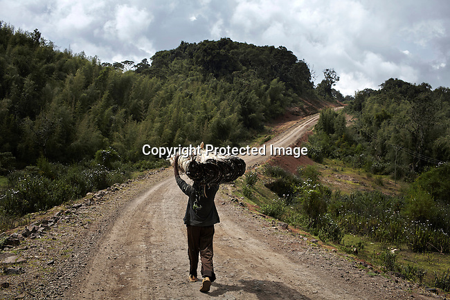 BONGA, ETHIOPIA: A man carries wood on a dirt road that he collected in the rainforest in a biosphere on December 5, 2012 outside Bonga, Ethiopia. This Kaffa region is known for its coffee production, wild coffee grown in high altitudes. This region is the original home of the coffee plant, coffee Arabica which grows in the forest of the highlands. The red berries are the main source of income in the area. Children and cattle also drink coffee. (Photo by: Per-Anders Pettersson)