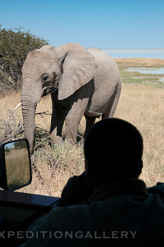 Man on safari in vehicle watching a nearby African elephant in Etosha National Park, Namibia. (This species is found in many African countries including South Africa, Botswana, Zambia, Zimbabwe, Namibia, Tanzania, Kenya, Rwanda, Uganda, Angola, Democratic Republic of Congo)