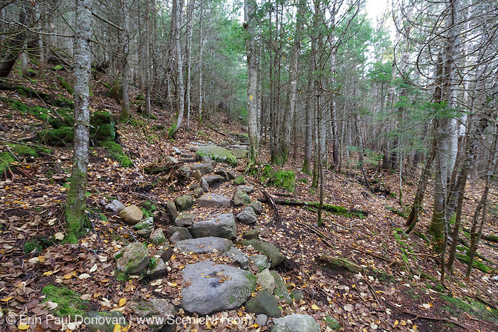 A stretch of the Mt Tecumseh Trail in New Hampshire covered in leaf drop. A herd path is forming in the woods on the right-hand side of the trail from hikers bypassing this section of trail work. If this area isn't blocked off, over time, a herd path will form and potentially create more erosion issues. And this defeats the purpose of the trail stonework.