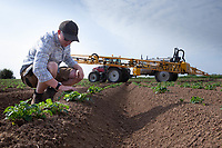 27.5.2020 Spray operator checking potatoes before spraying for blight    <br /> ©Tim Scrivener Photographer 07850 303986<br />      ....Covering Agriculture In The UK.