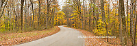 63995-00906 Road in fall, Brown County State Park, IN