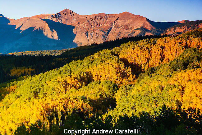 The West Elk Mountains and changing aspen trees near Crested Butte, Colorado are illuminated by the early morning sun.