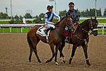 TORONT,CANADA-SEP 15: Diamond Sparkles is before the Natalma Stakes at Woodbine Race Track on September 15,2019 in Toronto,Ontario,Canada. Kaz Ishida/Eclipse Sportswire/CSM