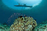 Papuan outrigger dugout canoe looms overhead in the reef
