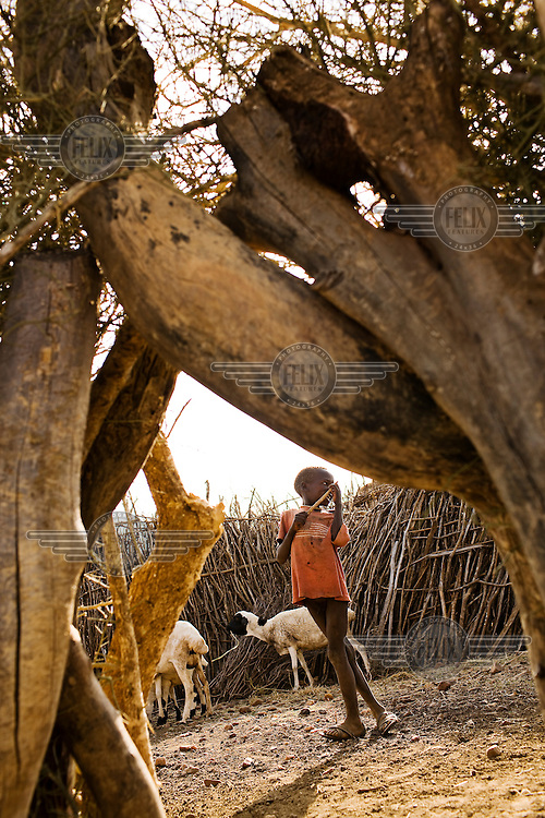 A young goatherder with some of his animals standing inside a brushwood pen.