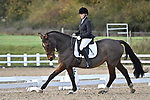 Stapleford Abbotts. United Kingdom. 09 November 2019. Class 5. Unaffiliated Dressage. Brook Farm training centre. Stapleford Abbotts. Essex. United Kingdom. Credit Garry Bowden/Sport in Pictures.~ 09/11/2019.  MANDATORY Credit Garry Bowden/SIP photo agency - NO UNAUTHORISED USE - 07837 394578
