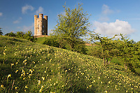 United Kingdom, England, Worcestershire, Broadway: Broadway Tower with cowslips | Grossbritannien, England, Worcestershire, Broadway: Broadway Tower, Fruehlingslandschaft mit Schluesselblumen (Primula veris)