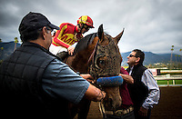 ARCADIA, CA - FEBRUARY 04: Hoppertunity returns to unsaddle after winning the San Antonio Stakes at Santa Anita Park on February 4, 2017 in Arcadia, California. (Photo by Alex Evers/Eclipse Sportswire/Getty Images)