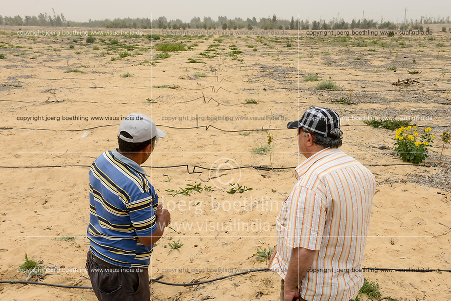 EGYPT, Ismallia , Sarapium forest in the desert, the trees are irrigated by treated sewage water from Ismalia, new Cypress plantation with drip irrigation / AEGYPTEN, Ismailia, Sarapium Forstprojekt in der Wueste, die Baeume werden mit geklaertem Abwasser der Stadt Ismalia bewaessert, kahl geforstete Flaeche, Neupflanzung mit Zypressen mit Troepfchenbewaesserung