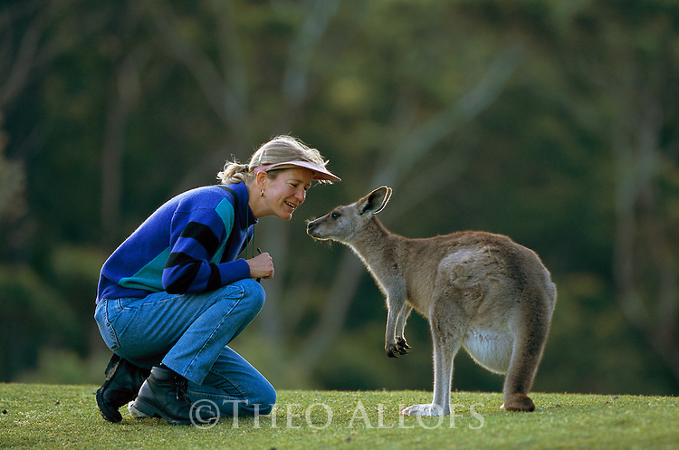 Australia, NSW, Murramarang National Park, tourist interacting with Eastern gray kangaroo