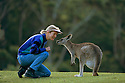 Australia, NSW, Murramarang National Park, tourist interacting with Eastern gray kangaroo