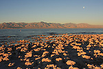 Salton Sea SRA at sunrise