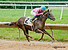 Wandering Kitten winning at Delaware Park on 7/13/13