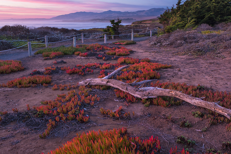 Nature provides this colorful ice plant grouping along the bluff trail in Leffingwell Landing State Park on California's central coast.