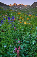 San Juan Mountains, CO<br /> American Basin with delphinium (Delphinium barbeyi), paintbrush (Castilleja rhexifolia), sneezeweed (Dugaldia hoopesii) bluebells (Mertensia ciliata) and other wildflowers in meadows beneath Handies Peak at sunrise