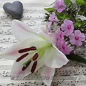 Gisela, FLOWERS, BLUMEN, FLORES, photos+++++,DTGK2001,#f#