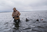 Guide and Owner of Four Flyways Outfitters, Jeff Wasley prepares duck decoys for a Harlequin bird hunt in Cold Bay, Alaska, Tuesday, November 1, 2016. The Izembek National Wildlife Refuge lies on the northwest coastal side of central Aleutians East Borough along the Bering Sea and Cold Bay.<br /> <br /> Photo by Matt Nager